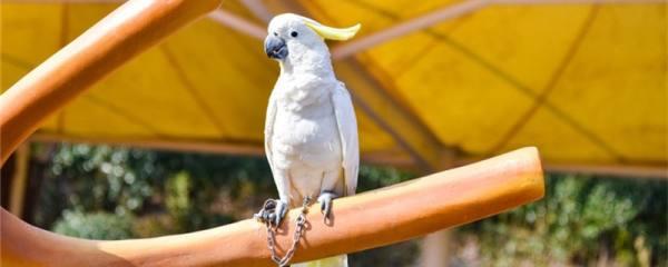 鹦鹉是哺乳动物吗