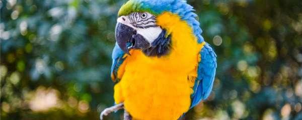 鹦鹉可以吃什么水果
