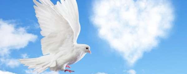 鸽子一年打几次疫苗