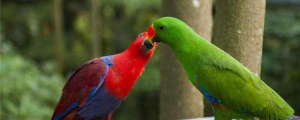 椰子壳可以作鹦鹉繁殖窝吗