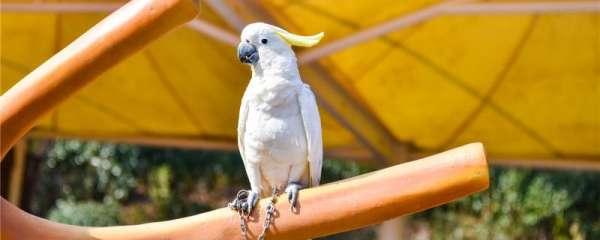 鹦鹉白天老是眯眼睛正常吗