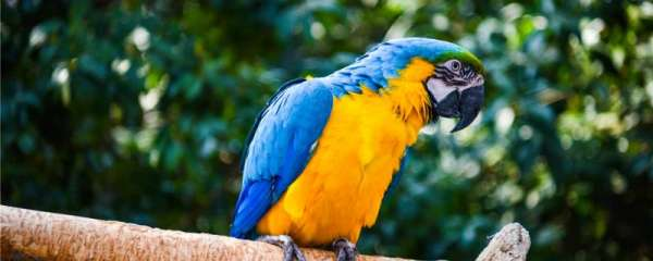 鹦鹉嗉囊不消化怎么治