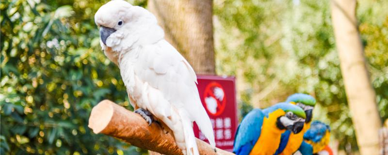 鹦鹉的寿命最长是多少年