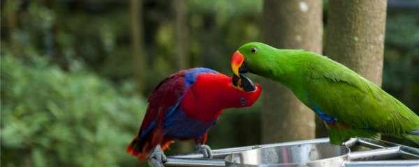 鹦鹉爱吃什么食物呢